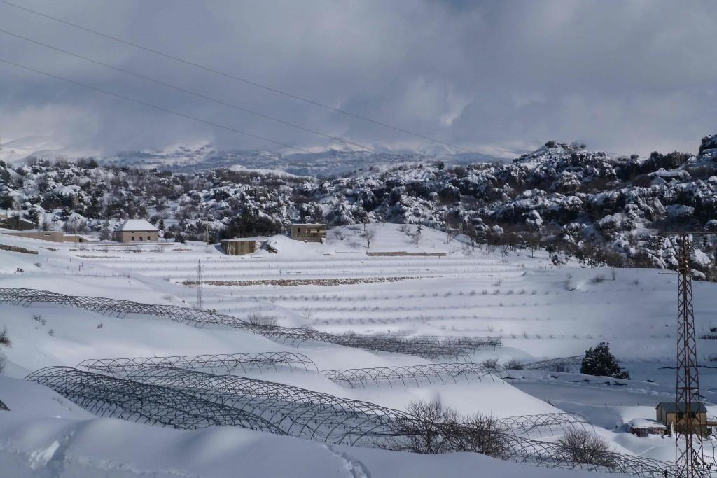 neige-liban